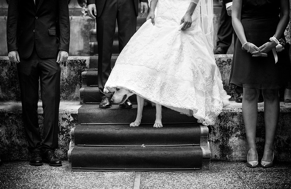 Dog wedding Tuscany