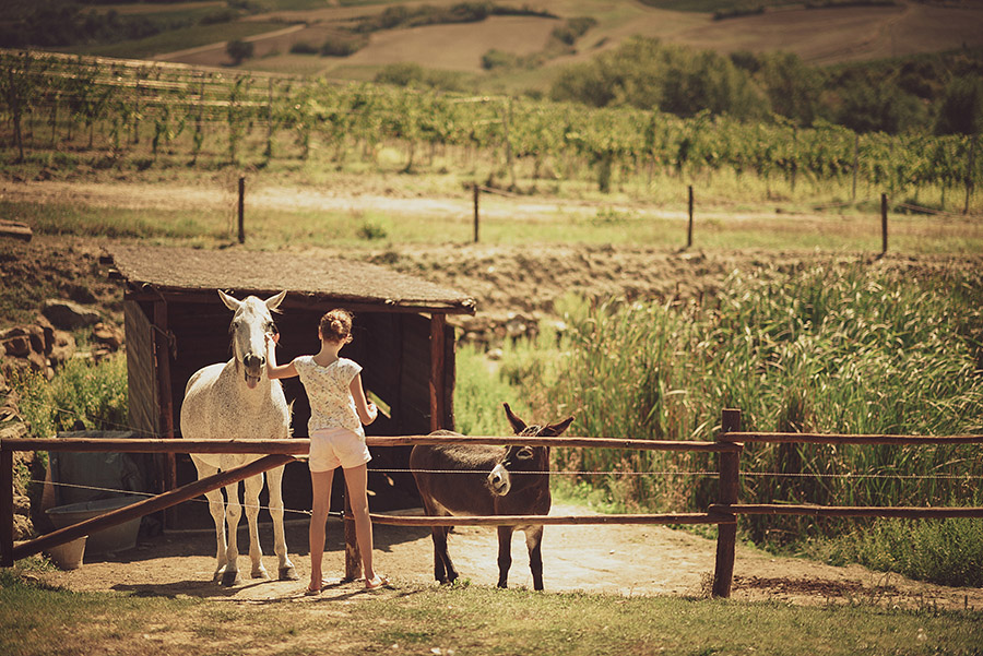 Wedding in Monte Follonico, Siena (Italy) countryside. Girl caresses horse. Andrea Corsi wedding photographer, Tuscany.